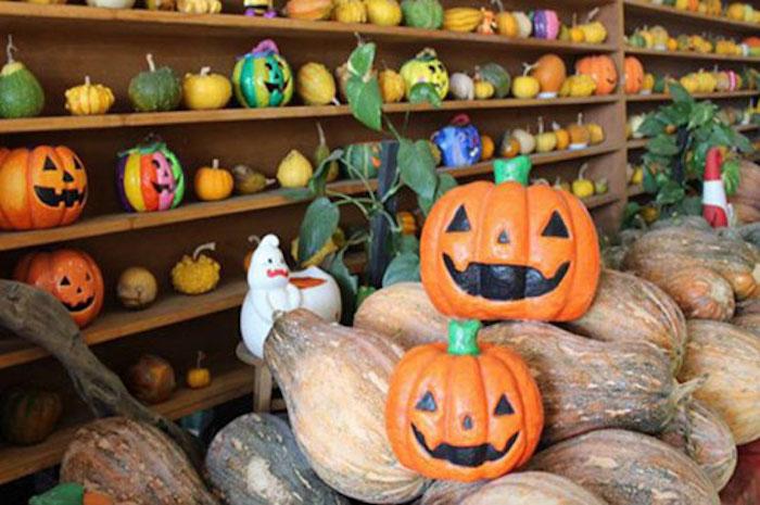 旺山休閒農場擁有世界450種以上之南瓜