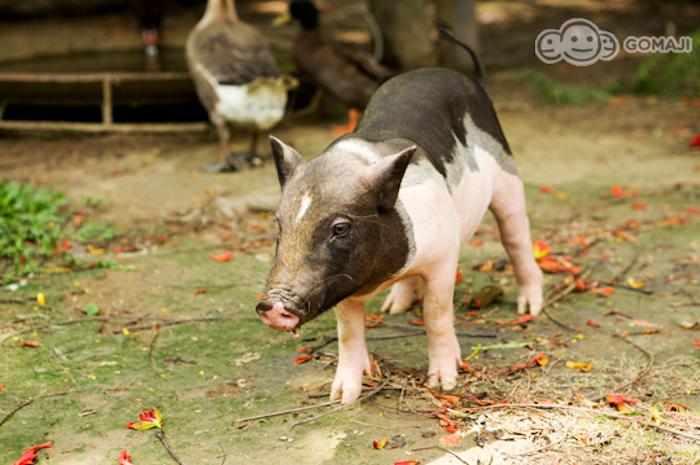 各種可愛動物讓你瞬間被療癒到