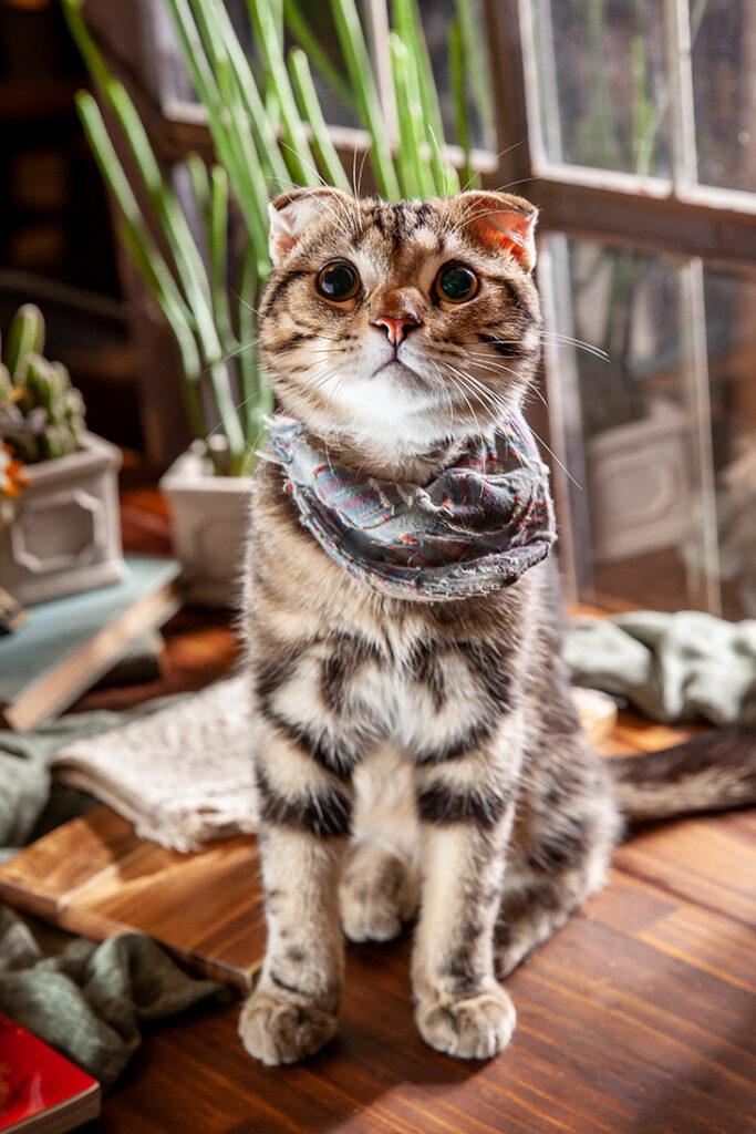 太陽是我的靈魂sunstar 店貓